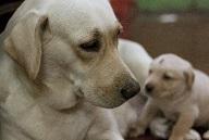 ペット・全ての動物達のためのアロマテラピー
