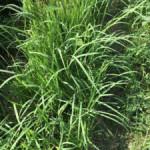 はじめての草刈と畝立て~初心者家庭菜園/自然農1