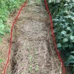 家庭菜園の間引き菜の収穫記録